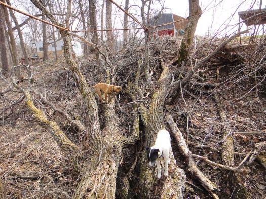 tree dogs