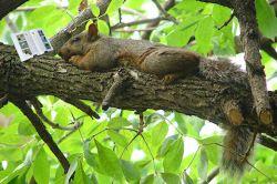 Reading Squirrel