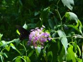 The ubiquitous butterfly picture. Notice all the vegetation is drooping from the drought.
