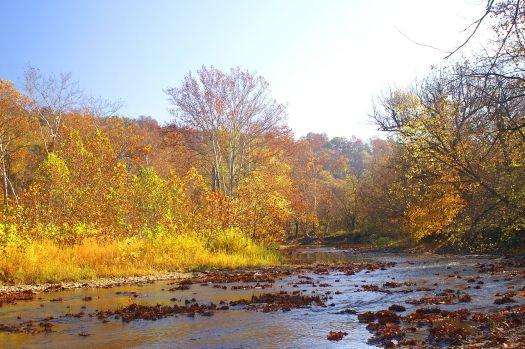 creek side yellow