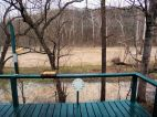 back deck view is always changing