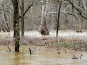 water almost all the way to the sycamores