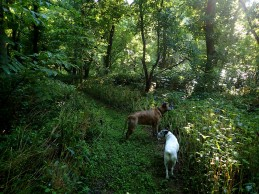 The dogs on one of the trails.