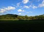 Hay, corn, trees, sky.